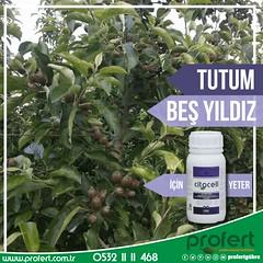 profert elma (Profert Gübre) Tags: elma apple fertilizer farmer farms fresh tarım toprak tarlabitkileri tabangübre bitki bitkikoruma besleme bakım sebze seracılık sebzecilik sera meyvecilik meyve