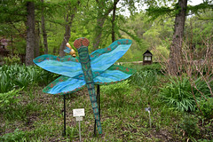 JIM_2934 (James J. Novotny) Tags: dragonflies sculptures sculpture d750 nikon rotarygarden rotarybotanicalgardens gardens garden gardenbotanical unlimitedphotos unlimiedphotos unlimited art artwork