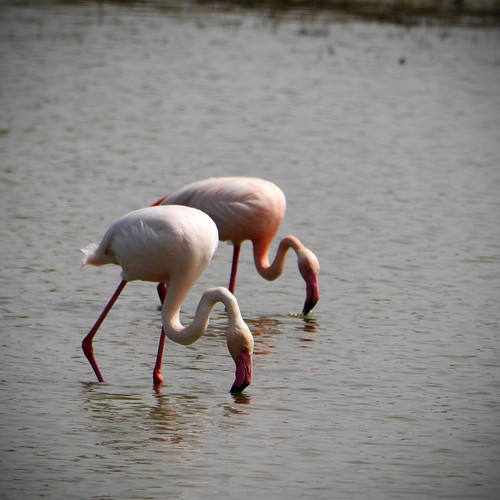 190414_flamingo-6