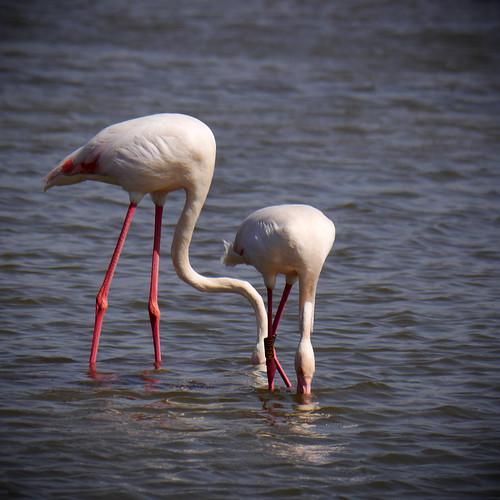 190414_flamingo-2