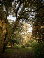 garlieston house of galloway-4121448 (E.........'s Diary) Tags: eddie ross olympus omd em5 mark ii spring 2019