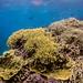 Flynn's Reef