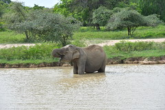 Hambantota (morome7e) Tags: safari hambantota sri lanka nature animals elephant buffalo jeep leopard