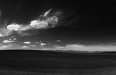 silence (San_Sanych) Tags: silence landscape minimalism sunset sky blackandwhite blackwhite nature пейзаж чб минимализм закат небо