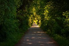 Pforte zum Biedensand (BENJONSON) Tags: lampertheim biedensand hessen deutschland landschaft landscape naturschutzgebiet