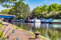The Bridgewater Canal at Runcorn (Bob Edwards Photography - Picture Liverpool) Tags: runcorn merseyside pictureliverpool bobedwardsphotography canalbarges water bluesky trees foliage towpath