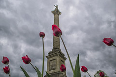 (Paul B0udreau) Tags: nikkor1855mm photoshop canada ontario paulboudreauphotography niagara d5100 nikon nikond5100 raw layer sir sirisaacbrock monument queenston heights tulips red pov