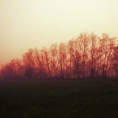 mist (Kroni Toropov) Tags: nature landscape forest fog mist природа пейзаж туман лес trees russia