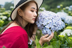 III09831 (HwaCheng Wang 王華政) Tags: hydrangea 人像 外拍 時裝 陽明山 繡球花 md model portraiture sony a7r3 ilce7rm3 a7r mark3 a9 ilce9 24 35 85 gm dress flower