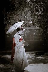 Maiko_20190409_121_15 (Maiko & Geiko) Tags: 20190409 myokenji temple kanohisa kyoto maiko 舞妓 妙顕寺 叶久 京都 叶家 kanoya ksumika