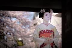 Maiko_20190409_121_28 (Maiko & Geiko) Tags: 20190409 myokenji temple kanohisa kyoto maiko 舞妓 妙顕寺 叶久 京都 叶家 kanoya ksumika