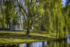 Willow and Pavilion (jsleighton) Tags: downingpark newburgh pavilion pond willow landscape