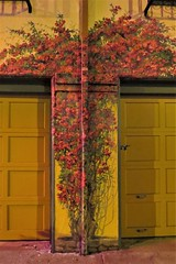 Lombard Street (lotosleo) Tags: lombardstreet sanfrancisco california sf ca mural urban crossamerica2015
