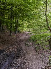 Bakony (VeresIbi) Tags: epl5 erdő olympusepl5 olympus outdoor olympusm40150mmf4056r okt magyarország mzuiko zuiko kéktúra nature natural út road túra természet tree túraút túraútvonal országoskéktúra tour
