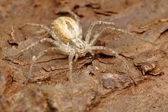 IMG_0012 (Ondřej Michálek) Tags: spider