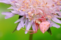 IMG_0005 (Ondřej Michálek) Tags: spider