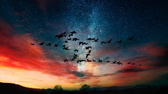 Geese and Stars (Iforce) Tags: geese stars image n1ipm art sky wallpaper trees colors landscape awardtree