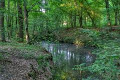 Nel bosco - Inside the wood (Roberto Marinoni) Tags: parcodelticino bosco wood ticino magenta pontevecchio alberi trees