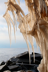Frozen Fingers (peterkelly) Tags: digital canon 6d northamerica wheatley beach ontario canada ice tree icicle rock water lakeerie shore greatlakes