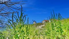 Arrigunaga 21 del 5 (eitb.eus) Tags: eitbcom 2068 g150114 tiemponaturaleza tiempon2019 primavera bizkaia getxo carlosmerino