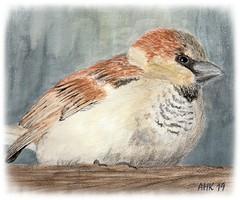 Sperling – Sparrow (antje whv) Tags: sperling spatz sparrow malerei animals tiere vögel birds