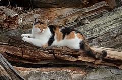 DSC_0006 (KvikneFoto) Tags: katt cat åsta tamron nikon mf