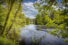 Cocken Woods, near Finchale, Durham (DM Allan) Tags: finchale durham river wear countryside cockenwoods