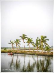 കടമക്കുടി | Kadamakkudy (:silvereye:) Tags: kochi iphonese boat kadamakkudi kadamakkudy ernakulam kerala limsclicks limraj