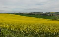 Le Lauragais sous le soleil - IMG_6410 (6franc6) Tags: occitanie ariège 09 avril 2019 domainedesoiseaux ddo 6franc6