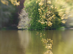 """Across the river and into the trees"" (Elisafox22) Tags: elisafox22 sony nex6 lensbaby composerpro 50mm optic doubleglass trees tmt htmt htt tree loch water reflections bokeh spring outdoors fyvie fyviecastle fyvieloch aberdeenshire scotland elisaliddell©2019 tistheseason"