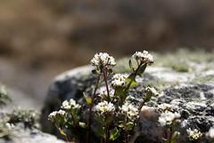 fotö (helena.e) Tags: helenae fotö husbil rv motorhome flower blomm