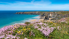 Bedruthan Steps, Cornwall, UK (David Lea Kenney) Tags: cliff cliffs coast coastline travel explore cornwall flowers flower beach beaches sky blue sea sand england uk landscape seascape coastalscape coastal kernow bedruthan bedruthansteps carnewas