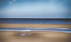 Pensarn Beach (Gill Stafford) Tags: gillstafford gillys image photograph wales northwales conwy abergele pensarn beach sea sands gulls empty emptiness peace quiet may summer