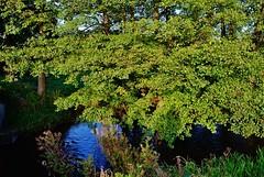 2012-10-02 okolice Loryńca  (127) (aknad0) Tags: polska wda krajobraz rzeki drzewa