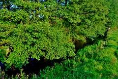 2012-10-02 okolice Loryńca  (126) (aknad0) Tags: polska wda krajobraz rzeki drzewa