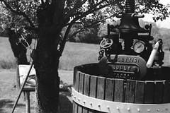Countryside (IG: Ceche_Analogico) Tags: 6x9 film filmisnotdead mamiya universalpress sekor film120 120 analog analogphotography blackandwhite black blackwhite bnw bw trees wood grain italy
