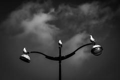 Osiris (P.Chardet) Tags: goelands monochrome noiretblanc blackwhite lampadaire nuages floorramp gulls