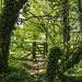 Gate near Northington, Hampshire