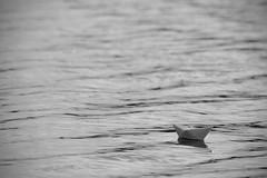 The Unknown / Неизвестность (Boris Kukushkin) Tags: bw water paper sheep waves чб вода волны кораблик бумажный