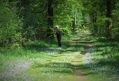 Hollandsche Rading, the Netherlands (Elisa1880) Tags: hollandsche rading de lage vuursche utrecht nederland netherlands birthday walk verjaardagswandeling bos woods forest