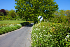 Kent Country Lanes (Adam Swaine) Tags: lanes counties countrylanes countryside ukcounties broads broadbritain broadsuk hedges hedgerows roads naturelovers nature kent aonb kentweald kentishlandscapes trees rural ruralkent naturesfinest beautiful canon tree green southeast 2019
