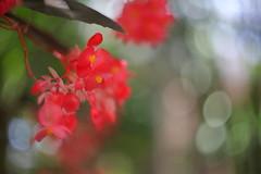 the garden (maker of films) Tags: flower red green canon 5d mark ii lens manual