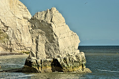 Sea Stack (Croydon Clicker) Tags: stack sea ocean water cliff chalk sky blue white seagulls birds seaford sussex eastsussex nikkor