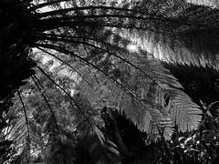 mull of galloway logan botanic garden-4131574 (E.........'s Diary) Tags: eddie ross olympus omd em5 mark ii spring 2019 botanic garden logan mull galloway