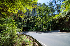 Bend in the Road (Jared Beaney) Tags: canon canon6d australia australian photography photographer travel melbourne hill hills mountain mountains yarraranges blackspur drive road healesville narbethong forest ferns dandenongs victoria
