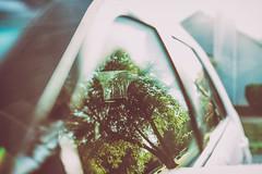 It's a beautiful day in the neighborhood (Sarah Rausch) Tags: windowwednesday 50mm 18 sony reflection suburbs depth
