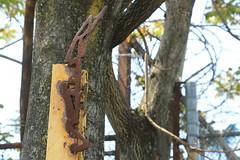 revs (Luna Park) Tags: ny nyc newyork brooklyn graffiti sculpture metal weld revs tree fence lunapark