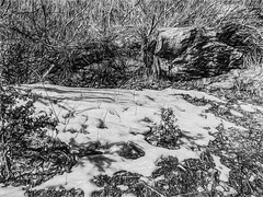 Spot Of Snow (B/W) (p) (davidseibold) Tags: america bw blackandwhite california jfflickr kerncounty monochrome painting photosbydavid postedonflickr snow tehachapi tehachapimountainpark unitedstates usa