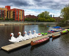 "Swan boats are back! (montreal_bunny) Tags: transportation 2019 ""project365"" ""myneighbourhood"" ""atwatermarket"" ""h2oadventures"" ""swanboats"" ""lachinecanal"" montreal"