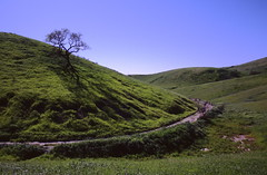 Charred Tree above Trail, Hidden Hills, California (joelfetzer) Tags: upperlasvirgenescanyonopenspacepreserve sanfernandovalley kodak ektachrome canona1 tree hiddenhills california